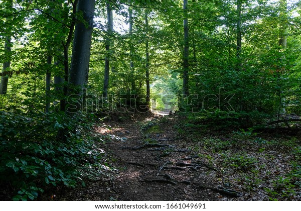 Hiking trail trough the green forest in late spring