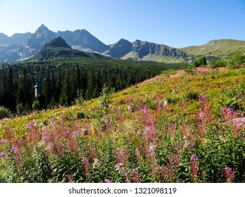 hiking trail in valley Dolina Gasienicowa in mountain landscape and flowers of Tatra National Park during sunny summer day, close to Zakopane city, Tatras, Podhale region, southern Poland, Europe