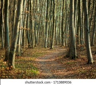 Hiking trail walkway in spring forest, nature background