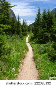 Hiking trail in the wilderness