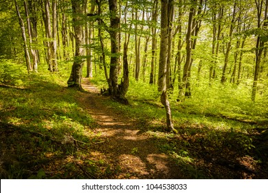 Hiking trail winding across green forest in early morning light, Plitvice Lakes National Park, Croatia