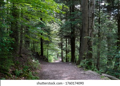 Hiking trail in the woods of Rickett's Glen State Park. Located in Pennsylvania.