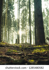 Hiking trail in the woods, with sunlight shining through the trees