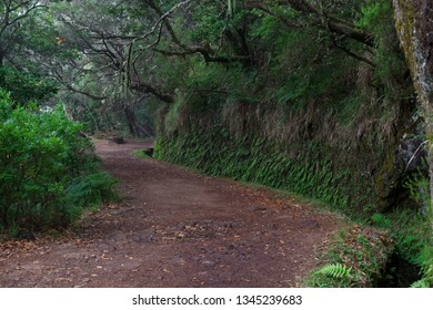 Hiking trails along levadas to Risco fountain on Portguese island of Madeira