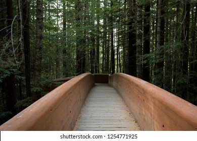 Hiking trails at the Lady Bird Johnson Grove Trail in California Redwoods National Park and State Parks.