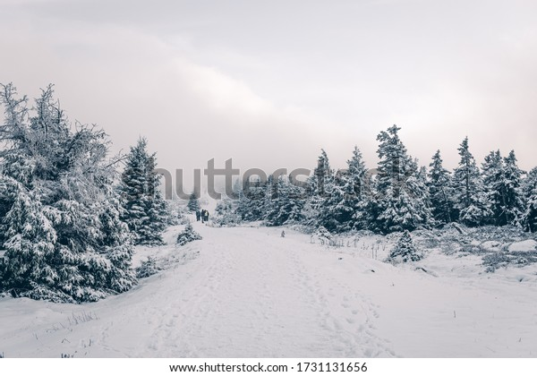 Hiking trails lead through the snowy winter forest in the Harz National Park