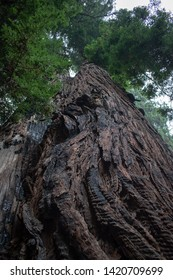 Hiking Trails in Muir Woods National Park