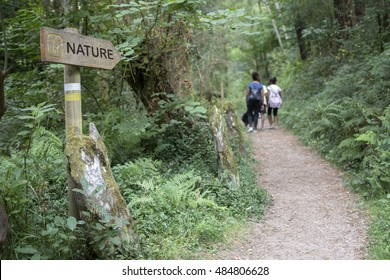 HIKING TRAILS, walking a route into the wood, nature simbol