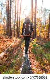 Hiking woman in the autumn forest with a backpack on a fallen tree with a stick in her hands. Back view