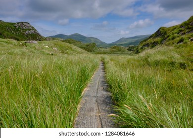 Hiking wood boardwalk leading the way through high grass towards rolling mountains. Path has a slight curve through middle of frame. Concept of adventure towards unknown
