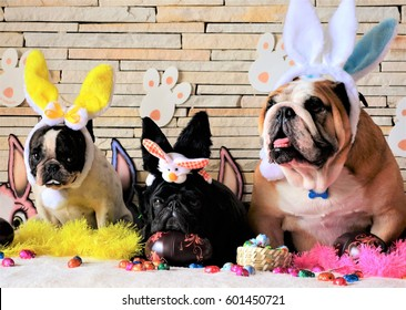 Hilarious Dogs Easter