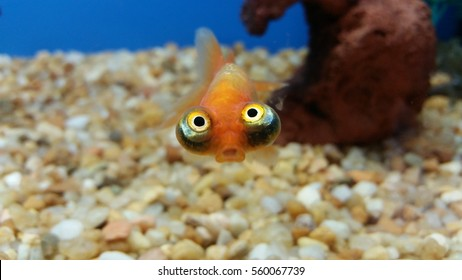 Hilarious fish face expression