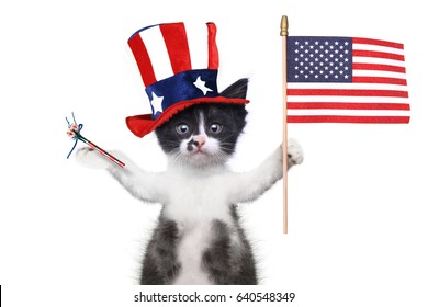 Hilarious Kitten Celebrating the American Holiday 4th of July