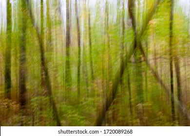 Hildene Woods, Manchester, Vermont. Intentional Camera Movement.