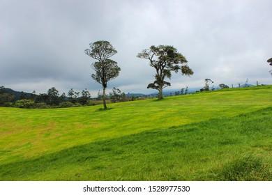 hill country mountains ambewela farm