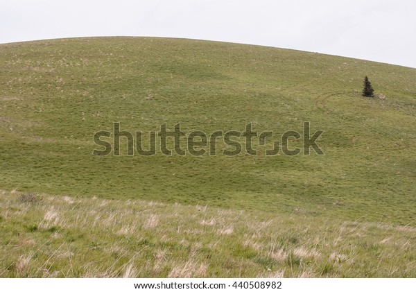 hill covered by meadow with only one isolated tree in Velka Fatra mountains in Slovakia