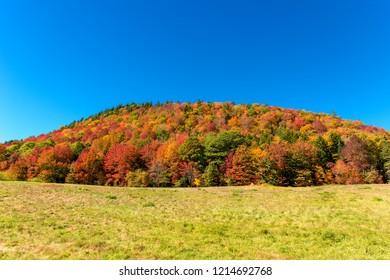 A hill covered with colorful trees in the fall. Blur sky above and field below.
