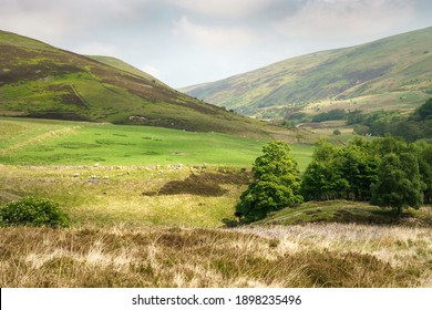 Hill farming near Langlee, New Burn, Harthope Burn in the Cheviot Hills, mountains of Northumberland, England, UK.