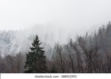Hill with forest in the winter with mist in the background.