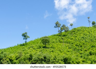 hill with jungle with Blue Sky with cloud