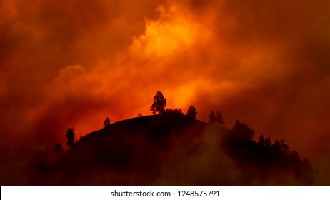 Hill with trees about to burn in red, orange wildfire