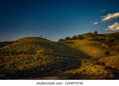 Hill vegetation on the island of Samothrace in Greece in the morning after the sunrise