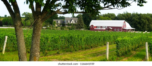 Hillier, Ontario / Canada - August 20 2018 - Hillier Estates Vineyard From The Roadside
