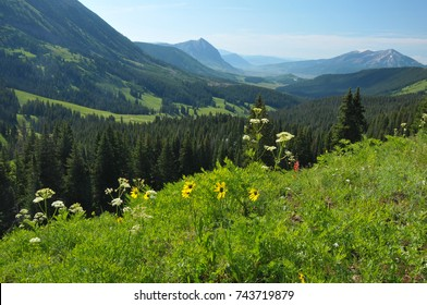 The Hills are Alive with Colorado Wildflowers at Crested Butte Colorado