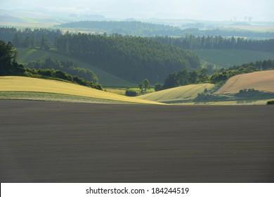 The hills of Biei, Japan