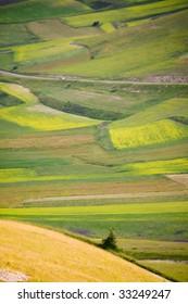 the hills of castelluccio di norcia during lentils flowering