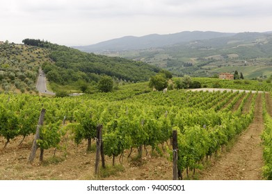 Hills of the Chianti region (Florence, Tuscany, Italy) with vineyards at summer