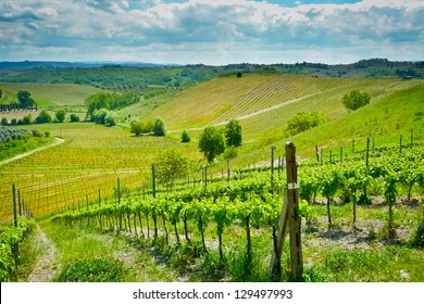 Hills covered by vineyards on a sunny day near Certaldo, Tuscany, Italy