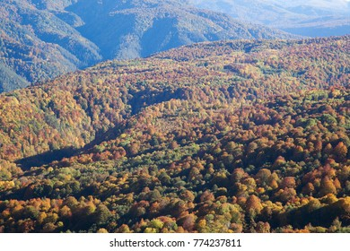hills covered with red and yellow forest in the fall