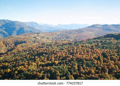 hills covered with red and yellow forest in the fall with blue sky