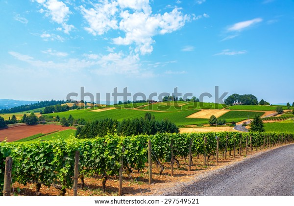 Hills covered in vineyards in the Dundee Hills in Oregon wine country