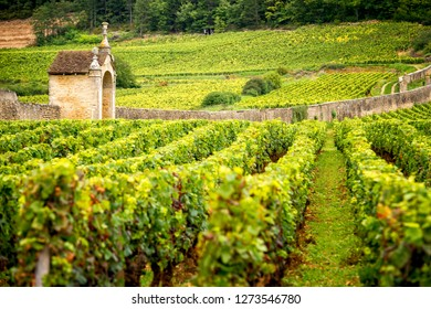 Hills covered with vineyards in the wine region of Burgundy, France