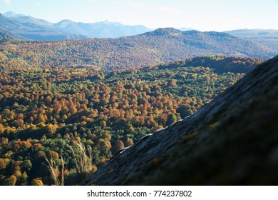 hills covered with yellow forest in the fall with blue sky