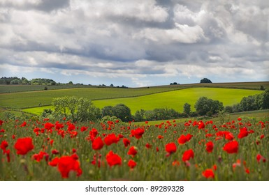Hills with field of poppies near Leafield, Cotswolds, UK