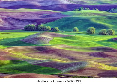 Hills and fields of Palouse region of Washington State America from Steptoe Butte in Spring