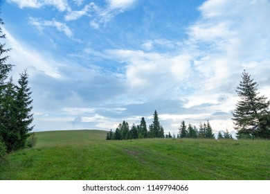 Hills with green grass and fir trees in summer against the blue sky and white clouds.