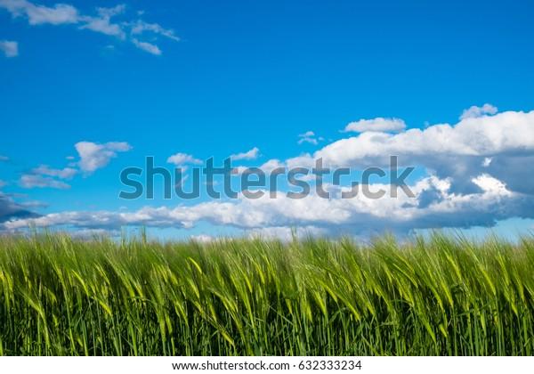 Hills landscape in Albinea