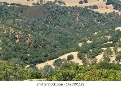 Hills off Northgate Road heading to Mount Diablo in Contra Costa County, California.