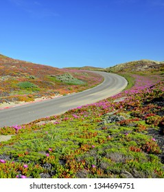 Hills and Sky in the Road to Point Reyes National Seashore, California. Sand dunes covered by pink flowers of Cooper's Ice plant, hills and sky