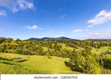 Hills and trees in Romania - summe season