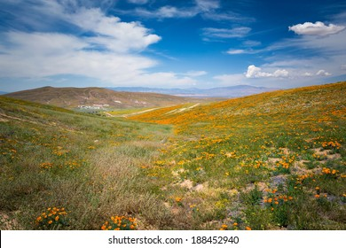 Hills and valleys of the desert in the Antelope Valley during the spring wildflower bloom