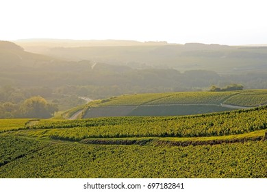 Hills of vines, Chablis wine, near Auxerre in misty weather (Burgundy, France)