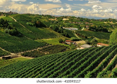 Hills with Vineyards in the Roero area, Piedmont italy