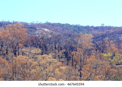 Hillside with burnt trees after Australian bush fires, Perth, Western Australia