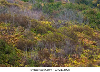 A hillside covered in colorful autumn trees and shrubs, British Columbia, Canada