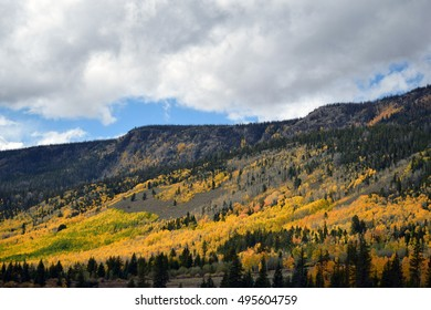Hillside covered with golden aspens and green pines set against a mountain with blue and gray cloudy sky in background.
